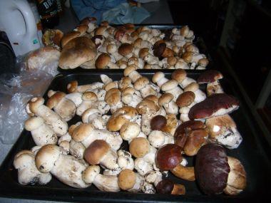 Polévka ze zvěřiny s houbami