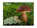 Brandovský houbeles recept