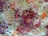 Špagetový dort recept