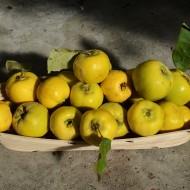 Marmeláda z kdoulí a pomerančové želé recept