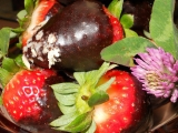 Jahody v čokoládě recept