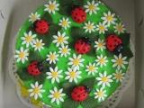Kopretinový dort s beruškami a pavoukem recept