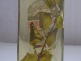 Octíčky koprový a meduňkový recept