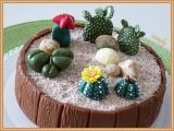 Dort Kaktusy recept