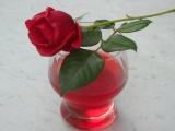 Růžový sirup recept