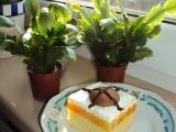 Mandarinkové řezy se šlehačkou recept