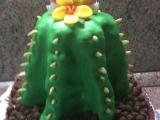 Dort kaktus recept