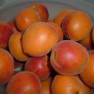 Meruňková marmeláda z pekárny recept