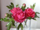 Jedlé květy z fondantu recept