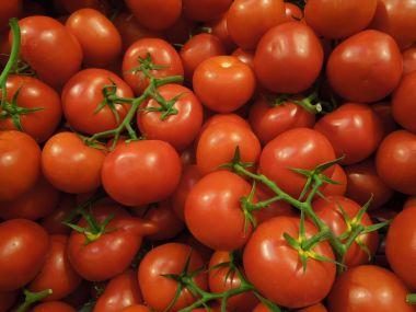 Rajčatový salát s křenem