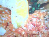 Tataráček z čerstvého lososa recept