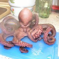 Flambovaná chobotnice recept