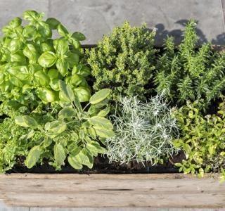13 bylinek, které oživí Vaši kuchyni