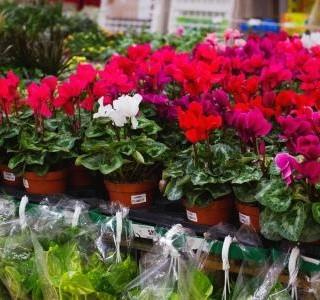 5 důvodů, proč dát šanci rostlinám ze supermarketu