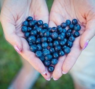 Borůvka brusnice - pevné zdraví v modré bobulce...