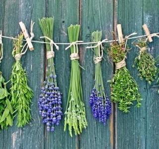 Bylinky sušené i čerstvé – rychlý průlet základními druhy