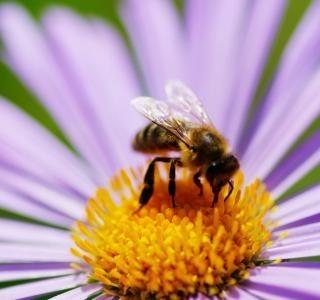 Co nás také může potkat o prázdninách? Včelí, vosí, sršní, komáří nebo čmeláčí bodnutí.