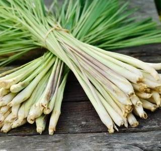 Ochutnejte méně známé druhy bylinek