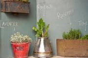 Březen je ideální čas pro sadbu bylinek: Vypěstujte si doma bylinky ze semínek…