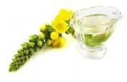 Divizna velkokvětá - majestátní léčivka je středem každé zahrady...