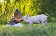 Nebojte se předsudků, přinášíme čtyři důvody proč se stát veganem…