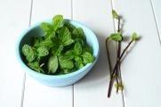 Nejlepší bylinky pro jarní detoxikaci organismu
