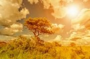 Rakytník - rostlina budoucnosti s vysokým obsahem vitaminu C…