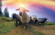 Velikonoční beránek - neodmyslitelná tradice...